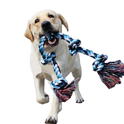 What dog supplies should be prepared before raising a dog