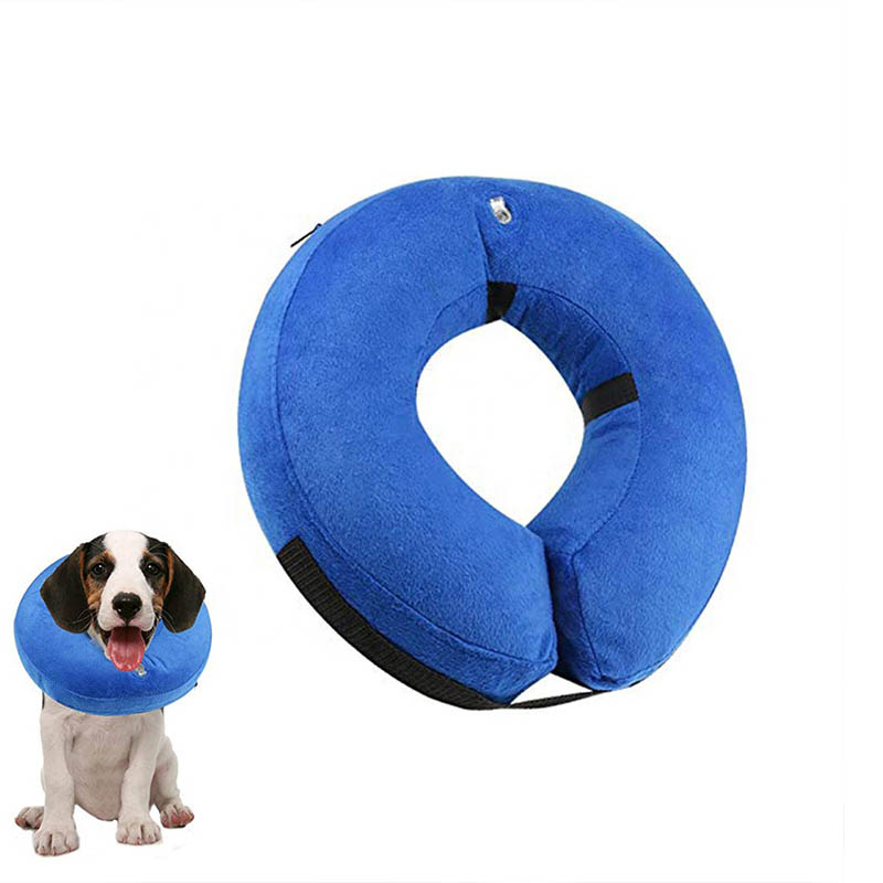 Wholesaler of dog accessories