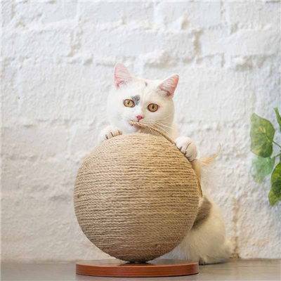 What are the tips for making cat products for cats