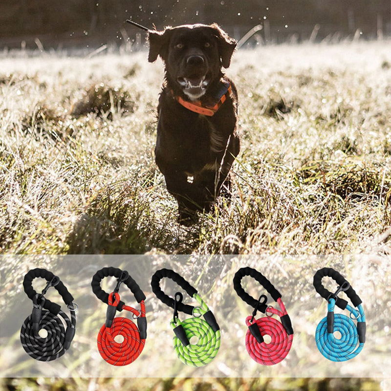 China dog products manufacturers