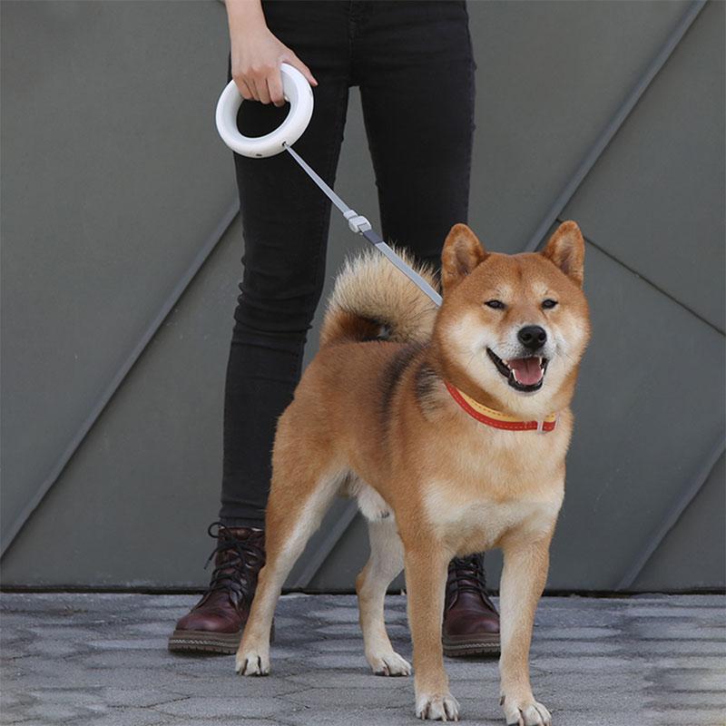 China dog products wholesaler